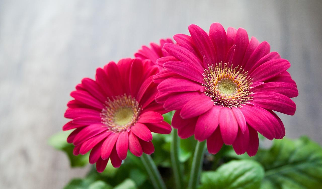 flower-631765_1280