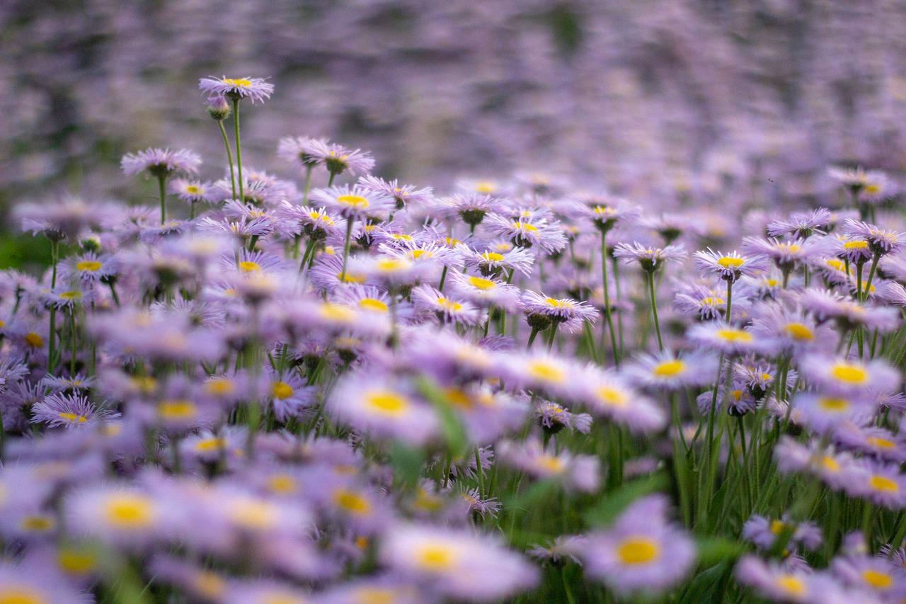 flowers-5080164_1280