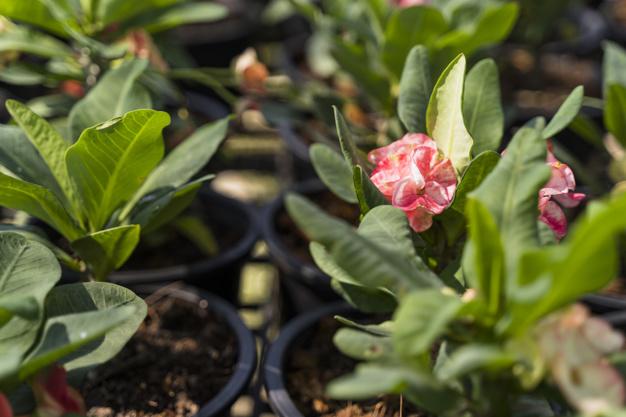 gardening_23-2148020415