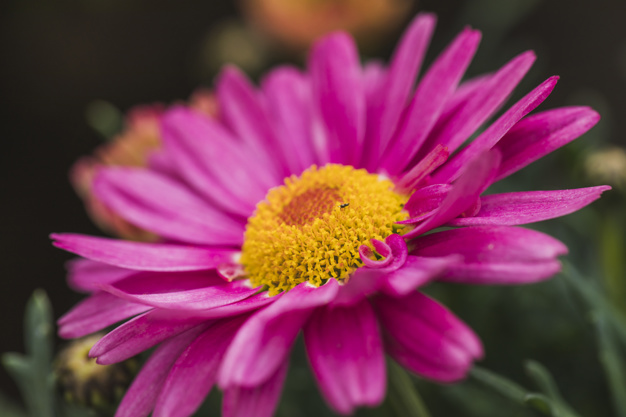 little-beetle-wonderful-violet-flower-with-yellow-center_23-2148060173