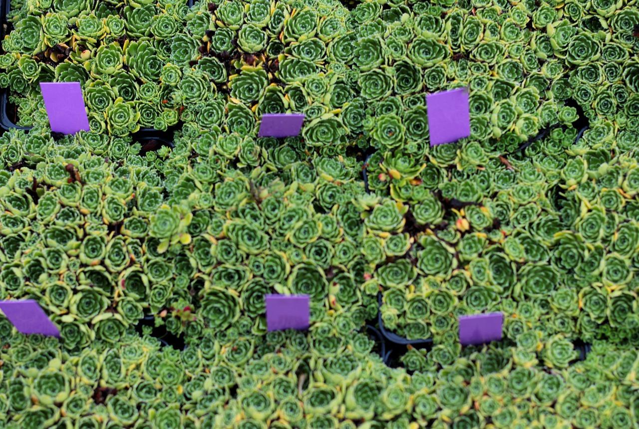 succulents-5388484_1280