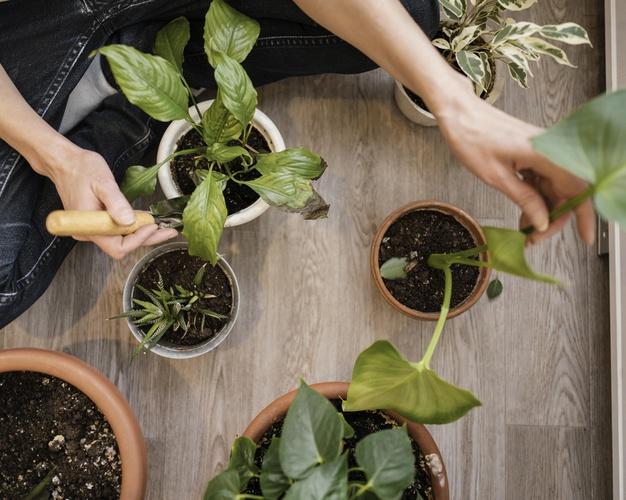 top-view-woman-planting-indoor-plants_23-2148850843